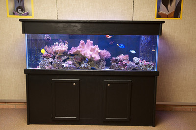 125 gallon reef aquarium in the library at Williamsport Area High School (Williamsport, PA).