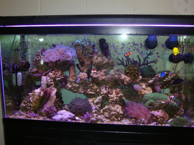 90 gallon reef aquarium at Lake-Lehman High School (Lehman, PA). 2011