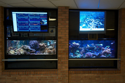 125 gallon and 300 gallon reef aquariums at Williamsport Area High School showing live and historic water conditions (left) and and informational slideshow on coral reef ecology (right).