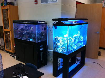 Lake-Lehman High School (Lehman, PA). Established 90 gallon reef in the left side of the picture. New, interconnected 110 gallon reef on the right side of the picture. Summer 2011.
