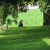 Blank farm shade