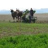Esch family planting tobacco 2