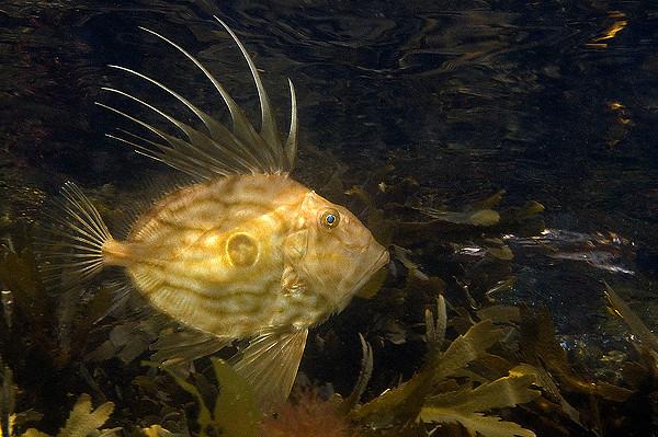 The gate keeper<br /> 11:a i fiskporträtt (Nordiska vatten)