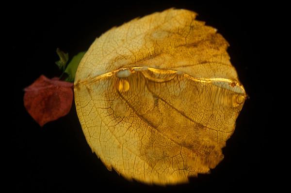 Autumn reflections<br /> 1:a i kreativ (Nordiska vatten)