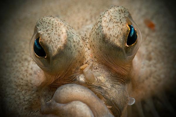 Close - 1:a i fisk i nordiska vatten.