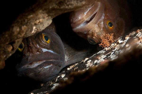 Friends - 7:a i fisk i nordiska vatten.