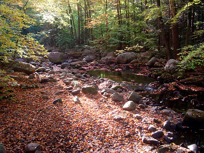 Fall leaves in Harriman State Park, New York.