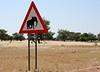 desert elephant crossing