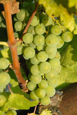 Napa - California Wine Country
