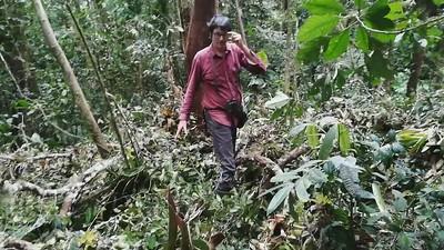 Natural treefall vs. Naranjilla plantation
