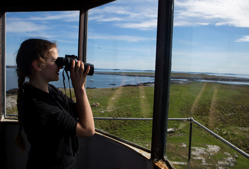 NASH ISLAND, Maine -- 05/17/2017 - Evie Wakeman, 15, uses binoculars to check on and count sheep from the lighthouse on Little Nash Island Wednesday. The family takes care of approximately 150 sheep spread between Little and Big Nash Islands. Ashley L. Conti | BDN