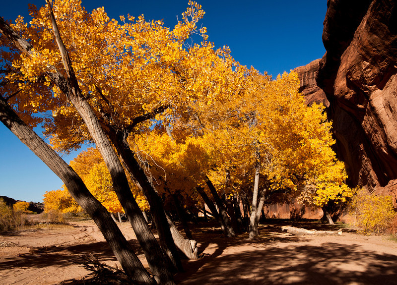 Fall colors on the floor of Canyon De Chilly Arizona