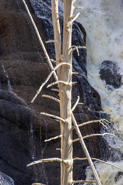 Skeleton tree and Gibbon Falls, Yellowstone National Park