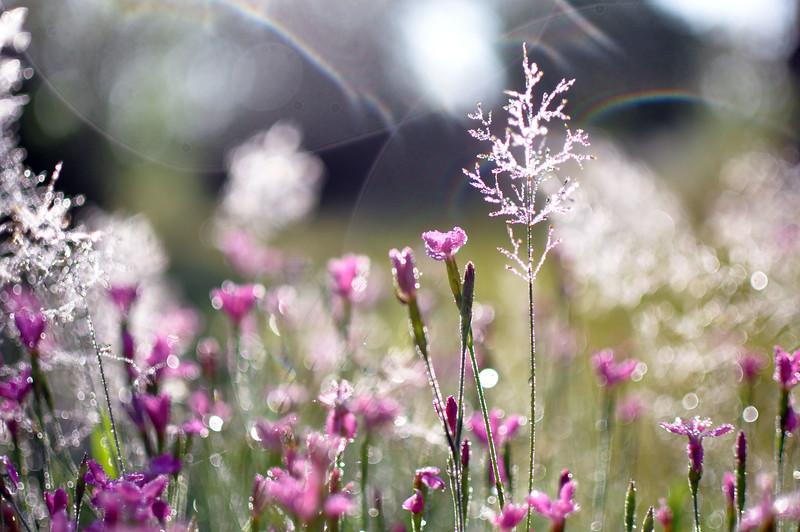 flowerdream1.1