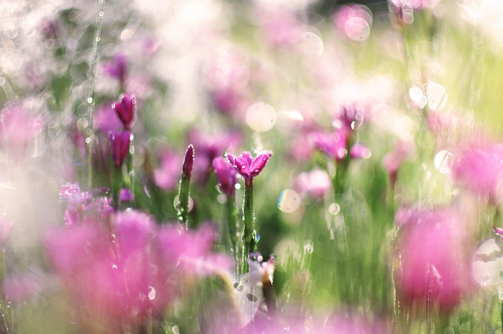 flowerdream2.6