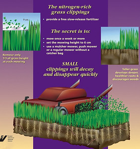 Metro Vancouver poster at our garden reviewing natural lawn care.