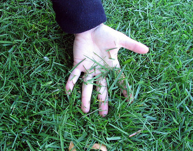 Leave clippings on your lawn to provide nitrogen and moisture. Mow often.