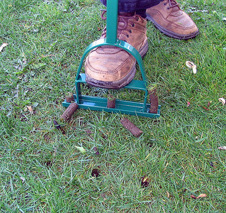 Aerate by hand in May or September to reduce soil compaction.