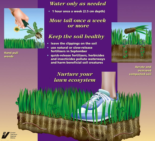 Metro Vancouver poster at our garden showing lawn care tips.
