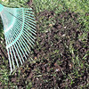 Top dress with a thin layer of compost and sand.