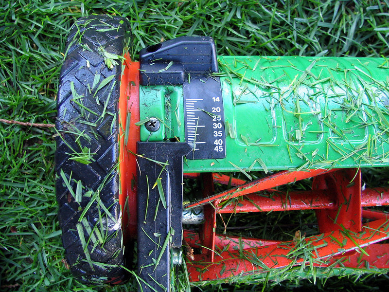 Set your mower to mow high. Long blades of grass develop deep roots.