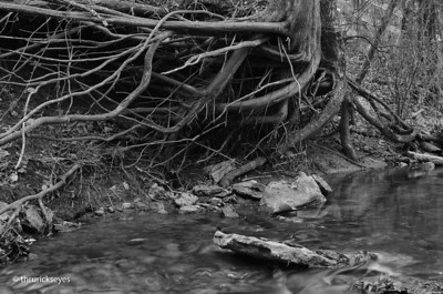 """L-bow Roots"" - I made this photo in the creek just east of my father-in-law's farm in Nolensville, TN."