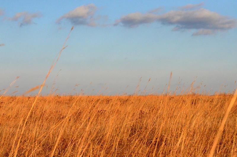 Looking east across Sand Prairie.