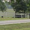 Long distance cows