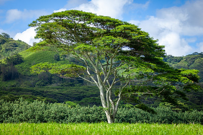 ALoraePhotography_Kauai_20190703_44737-HDR