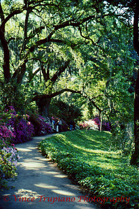 Magnolia Plantation in Charleston, SC