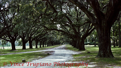 Boone Hall Plantation in Charleston, SC