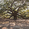 Angel Oak -1
