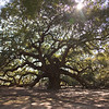 Angel Oak -3