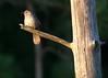 Capped bird seat