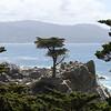 Lone Cypress - 17-Mile Drive, Pebble Beach, CA