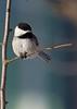 Delicate perch