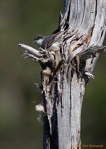 1st nest - no more
