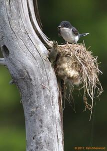 7/12/17 - Tiny  fuzzhead (far left of nest)
