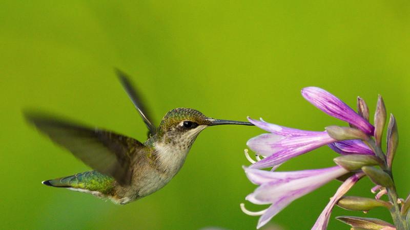 Ahhh, nectar!
