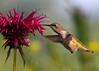 Nectar of the birds