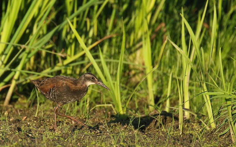 Virginia rail road