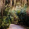 Camellia Magnolia Plantation -8