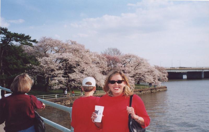 DC Cherry Blossoms 12