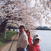 DC Cherry Blossoms 13