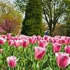 Sherwood Gardens-5