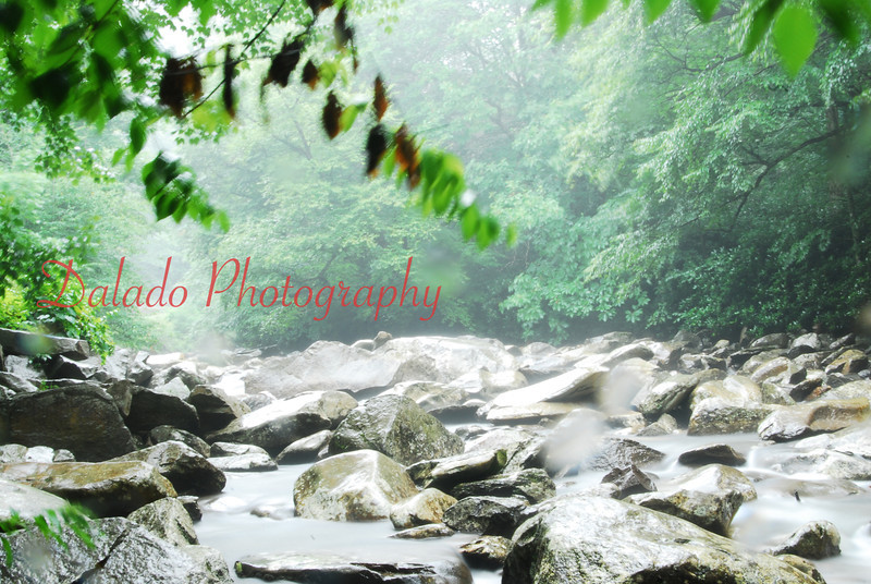 A rainy creek in the Smokey Mountains.