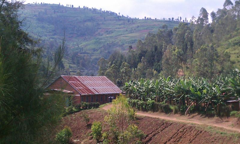 Rolling hills, banana trees and tea plantations.
