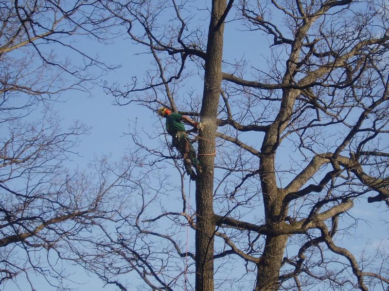 White Oak March 26 200444