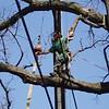 White Oak March 26 200416