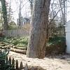White Oak March 26 200432